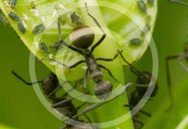 Was Sie über Termiten Wissen sollten