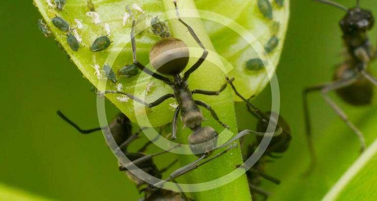 Termitenbekämpfung