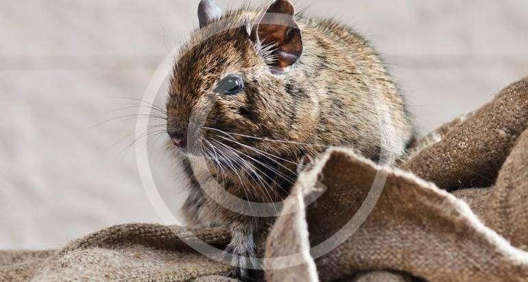 Mäuse-& Rattenbekämpfung